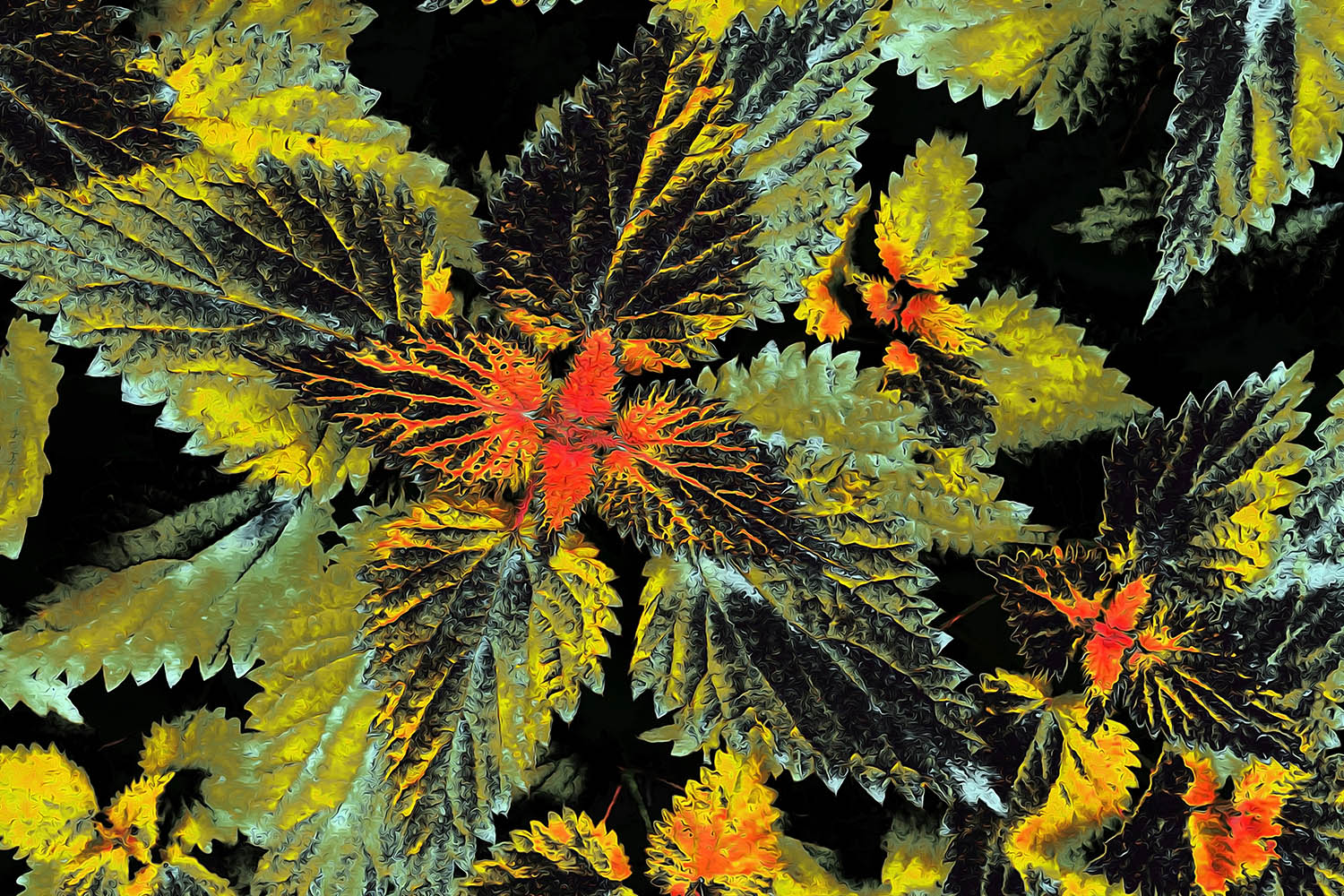 Graphic of stinging nettles